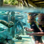Discovery Cove Announces Fall Dates for Special Florida Resident Rate