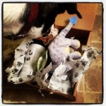 Spoiled Rotten Box for Dogs Review