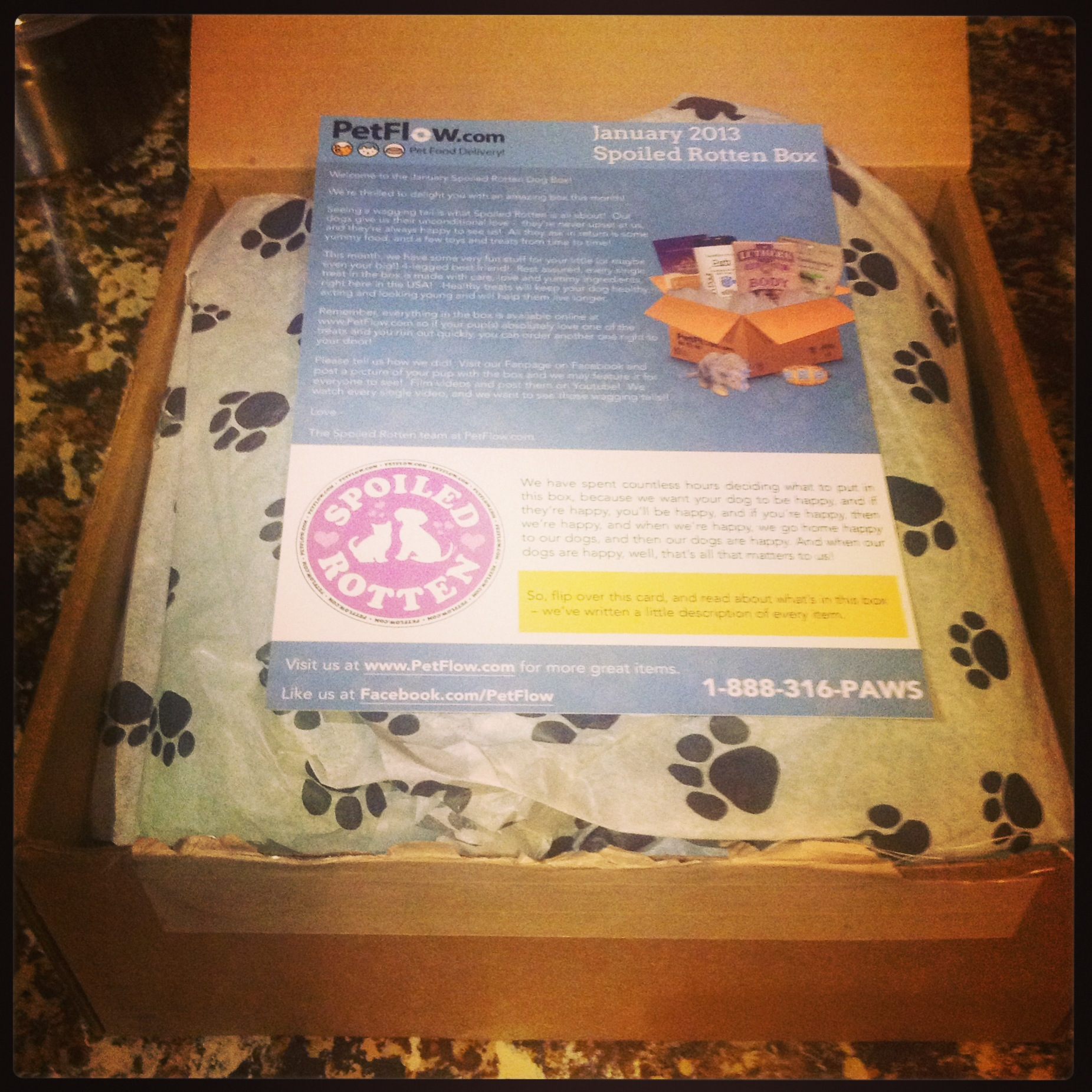 Spoiled Rotten Box for Dogs