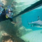 SeaWorld Camps Offer An Unforgettable Experience Like No Other