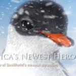 SeaWorld Orlando's Behind the Freeze – Puck's Antarctica