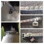LazyBonezz Pet Collar Review