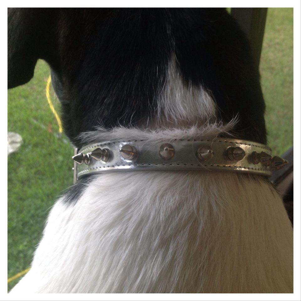 LazyBonezz Pet Collar
