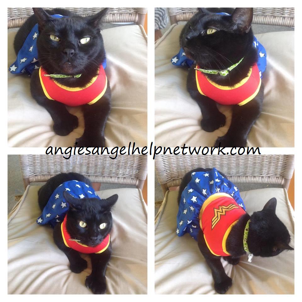 PetSmart Spooktacular Pet Costumes