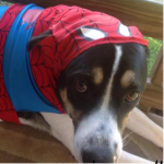 PetSmart Spooktacular Pet Costumes Product Review