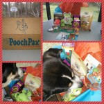 PoochPax Monthly Subscription Box