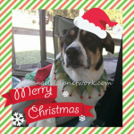Best Holiday Pet Products Are Found At PetSmart!