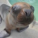 Tampa's Lowry Park Zoo – Sea Lion Splash