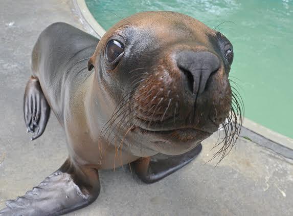 Tampa's Lowry Park Zoo - Sea Lion Splash