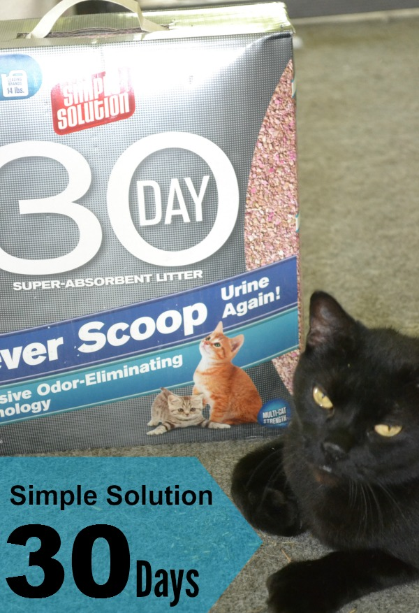 Simple Solution 30 Day Cat Litter Review