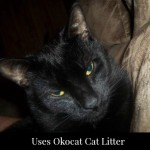 ökocat Litter Keeps Our House Smelling Clean With 4 Cats!