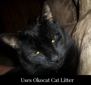 Okocat Litter Keeps Our House Smelling Clean With 4 Cats!