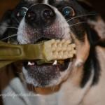 My Furry Kids LOVE Whimzees Dental Chews