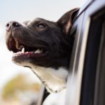 Best Features To Look for In Dog Friendly Vehicles
