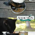 All Natural Hypoallergenic Addiction Dog and Cat Food