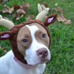 Zoo Snoods Will Keep Your Fur Babies Warm This Winter