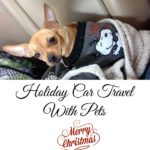 Holiday Car Travel With Pets