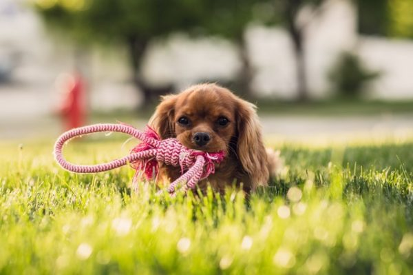4 Steps it Takes to Run a Successful Doggie Day Care