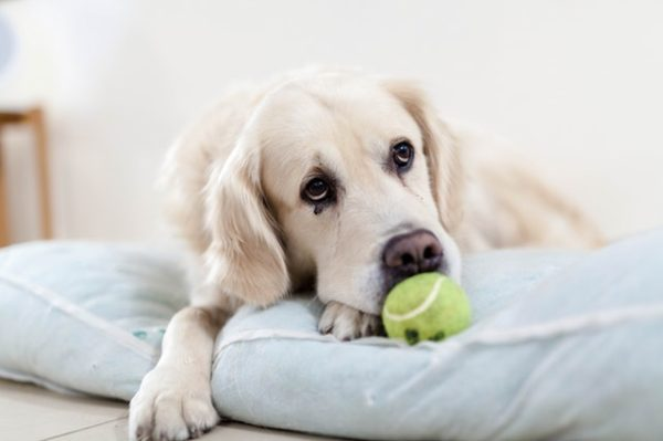 Reasons to Consider Indestructible Dog Beds