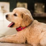 How to Housebreak a Puppy—4 Tips that Actually Work