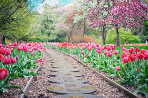 Prepare for Spring: 10 Lawn Care Tips for the Spring