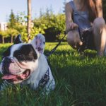 5 Tips for Choosing Healthy Treats for Your Dog